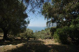 bouwkavel: olijfboomgaard met zeezicht in Zuid-Italië. Koopwoning in Zuid-Italië