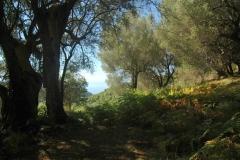 Bouwkavel in olijfboomgaard