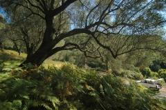 Olijfboomgaard met zeeicht in Cilento