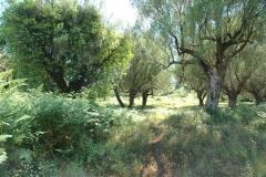Bouwperceel in Cilento-Zuid-Italië