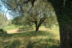 Bouwterrein Amorelli in Cilento (3)