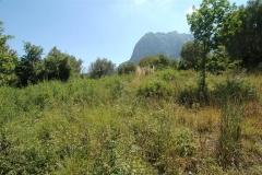 Royaalouwterrein in Cilento