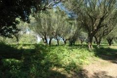 Uw tweede huis in een olijfboomgaard (2)