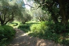 Uw tweede huis in een olijfboomgaard