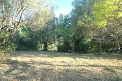 Camping Bufanomet olijfboomgaardBouwgrond met olijfboomgaard