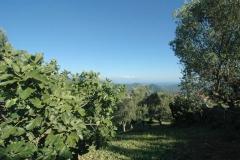 Camping Bufano met zeezicht in Cilento