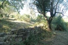 Vele olijfbomen zorgen voor de schaduw.