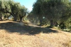 Groot bouwterrein , geschikt als camping in Cilento