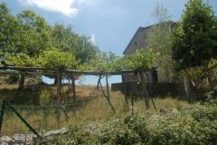 De-oude-druivenranken-bij-het-huis