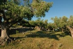 Cilento-eeuwenoude landbouwgronden (2)