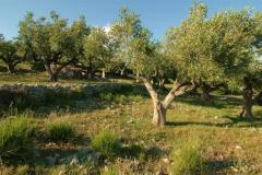 Cilento-eeuwenoude landbouwgronden (3)