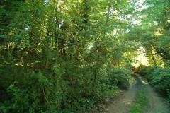 Cilento- schitternde, groene natuur (2)
