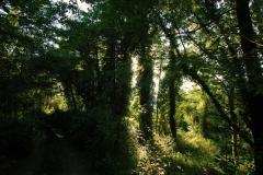 Cilento- schitternde, groene natuur (3)