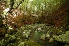 Cilento- schitternde, groene natuur (4)