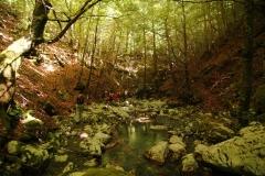 Cilento- schitternde, groene natuur (5)