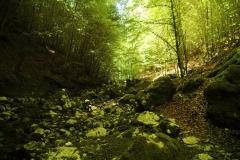 Cilento- schitternde, groene natuur (6)
