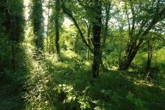 Cilento- schitternde, groene natuur