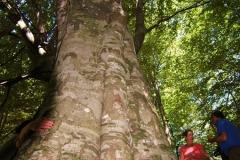 Cilento-wandelen door eeuwenoude bossen (4)