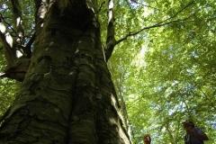 Cilento-wandelen door eeuwenoude bossen (5)
