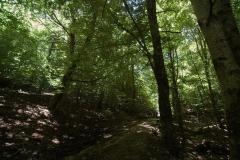 Cilento-wandelen door eeuwenoude bossen (7)