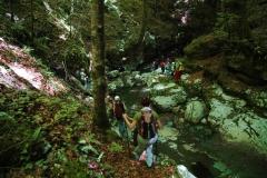 Cilento-wandelen door eeuwenoude bossen
