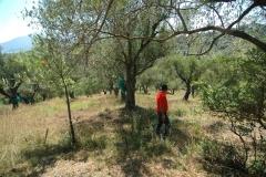 bouwkavel in olijfboomgaard (2)