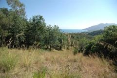 Bouwkavel in olijfboomgaard (3)
