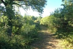 Camping met veel olijfbomen (2)