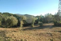 Camping met veel olijfbomen