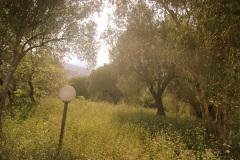 De-olijfboomgaard