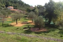 De olijfboomgaard tijdens de oogst.