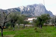 De olijfboomgaard.